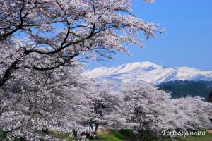 ToruSugawara_CRW_8815