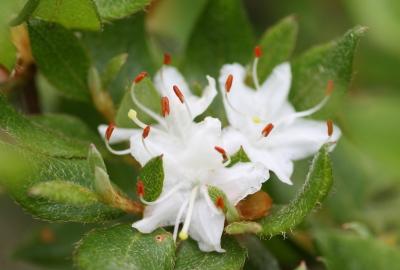 春季的野花