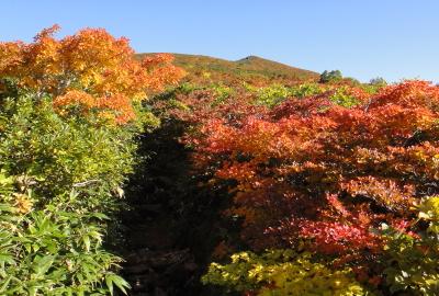 红叶最佳时期的登山道