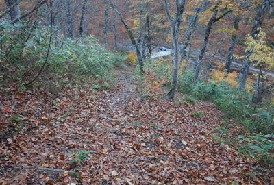 傾斜があり、落ち葉で滑るため要注意