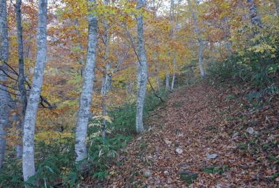 傾斜が少しあるが歩きやすい登山道