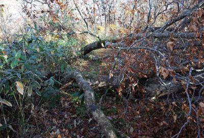 倒木が登山道を塞ぎ、通行を妨げているところもあり