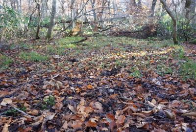 腐葉土が堆積し大量の水分を含み歩きにくいところもあり