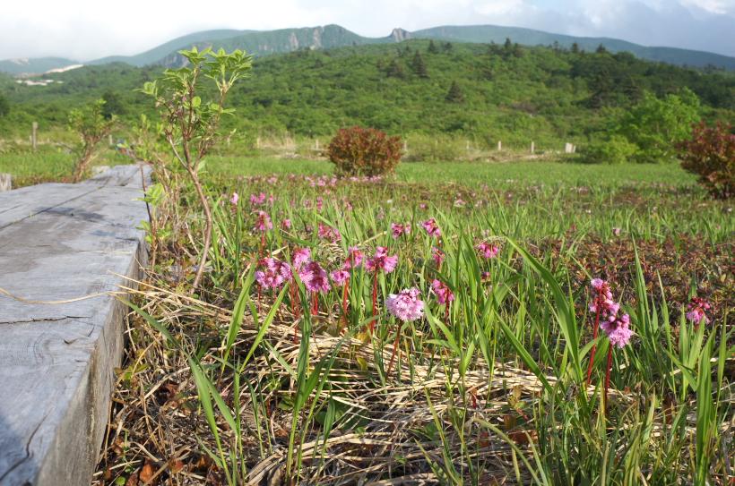岩鏡湿原から栗駒山(須川岳)を望む