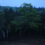 TatsuhikoHirata_IMG_7438