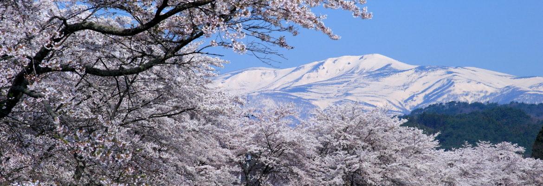 栗駒山と桜並木