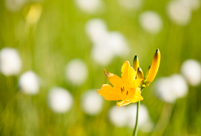 世界谷地の開花状況