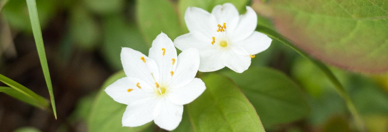 slider_spring_GR016685