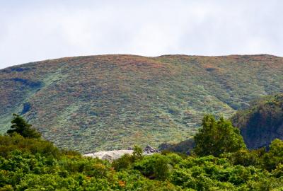 紅葉情報(9月14日)山頂