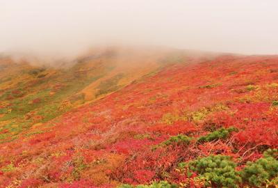 紅葉情報(9月22日)中央登山道