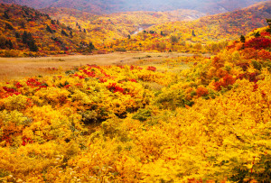 fall_leaves_1200_IMG_1907