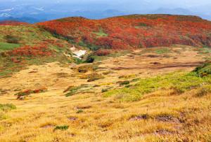 中央・東栗駒登山道分岐から草黄葉と東栗駒山稜線