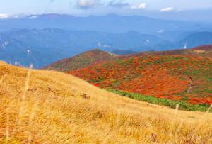 中央・東栗駒登山道分岐上部から自然観察路越しに焼石連峰