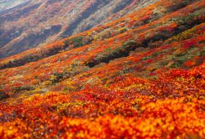 中央登山道、標高1,500m付近から 紅葉の終わり頃