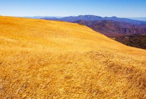 しろがね草原越しに焼石連峰と岩手山