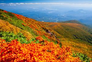 天狗岩付近より南斜面と中央登山道