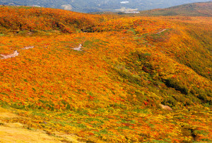 山頂から中央登山道
