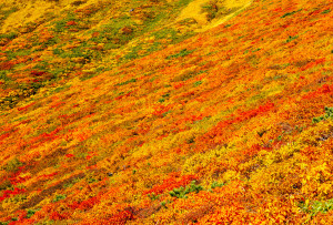 中央登山道、標高1,500m付近から 紅葉最盛期