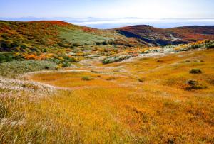 草黄葉と東栗駒山稜線