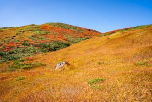草黄葉と山頂