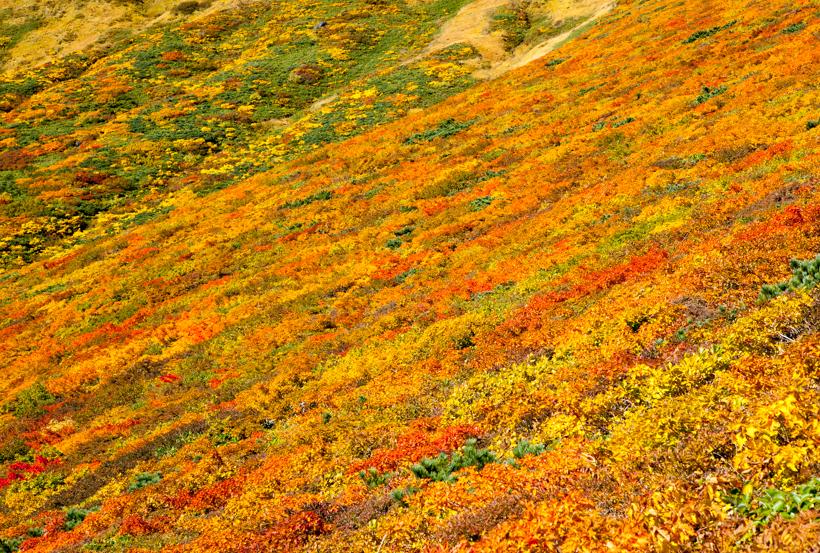 fall_leaves_IMG_7402