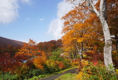紅葉情報(10月10日)須川高原