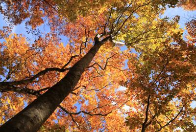 紅葉情報(10月16日)大地森登山道