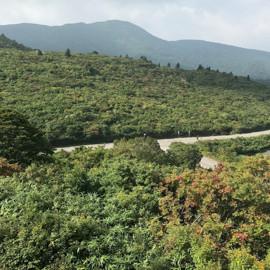 紅葉情報(9月20日)須川高原