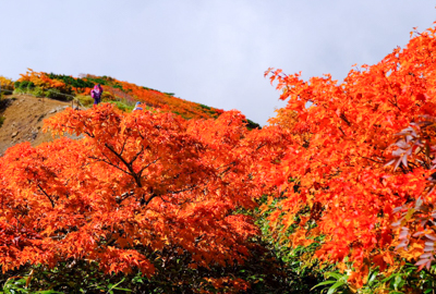 紅葉情報(9月24日)山頂付近