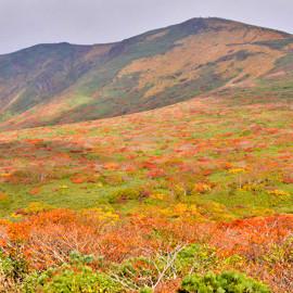 紅葉情報(10月1日)東栗駒登山道