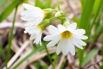 花の百名山 中央登山道