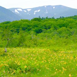 世界谷地の開花情報