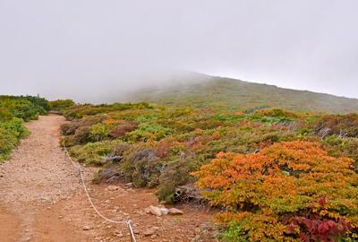 紅葉情報 山頂、中央登山道