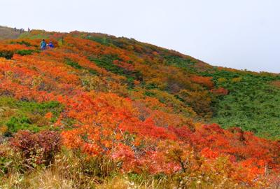 紅葉情報 山頂、須川登山道