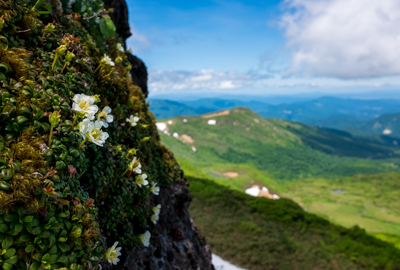 展望岩頭(天馬尾根登山道)の開花状況