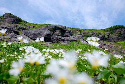 雲上の花畑 御室