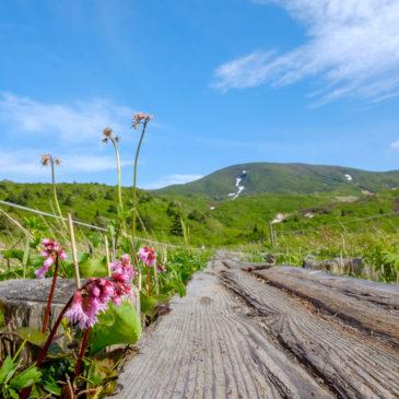 須川高原の開花情報