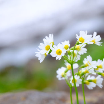 秘密の花園、裏掛(新湯)登山道の開花情報
