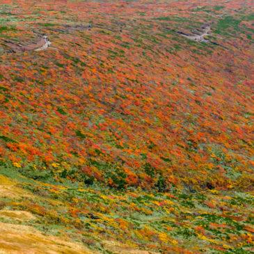 紅葉情報(中央登山道)神の絨毯